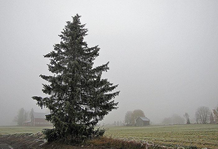 01-Dimma-vid-Myrtagsvaegen.jpg