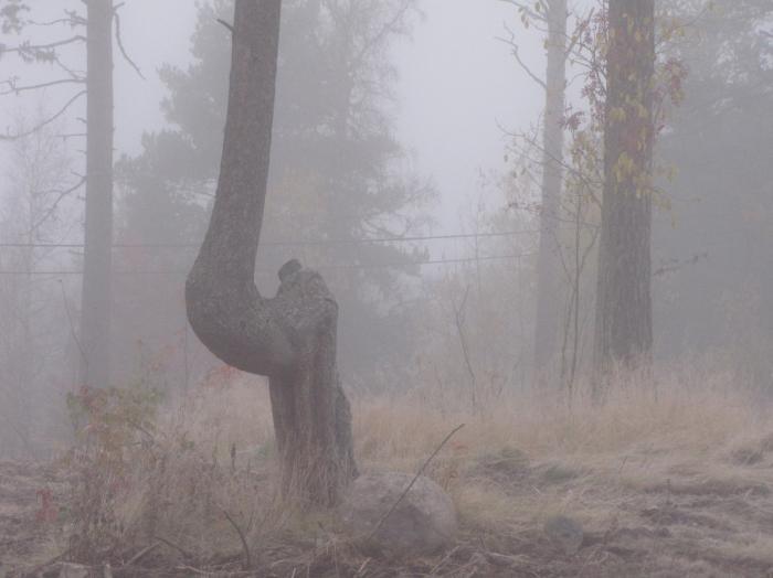 04 slaktarbacken i dimma