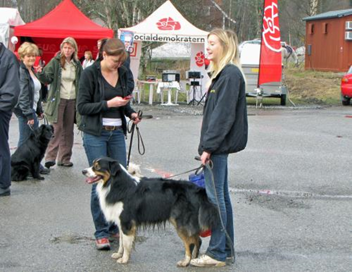 15 hundparaden