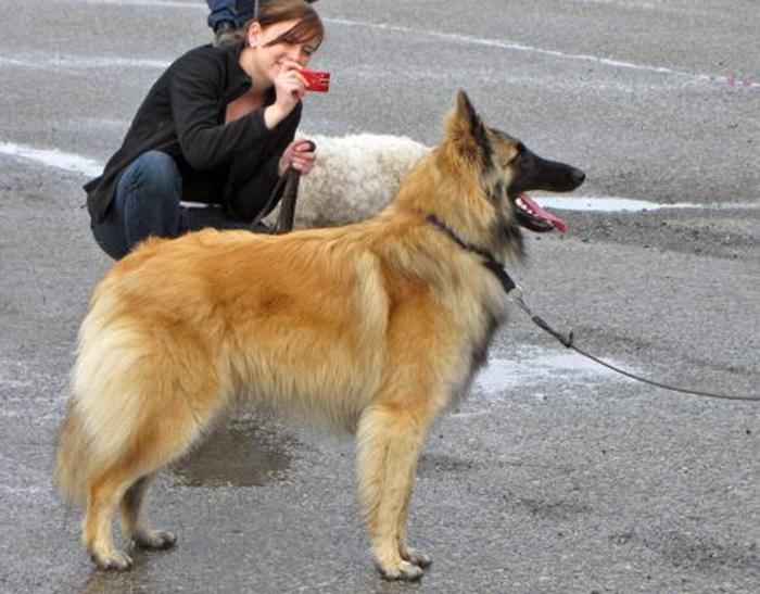 16 hundparaden