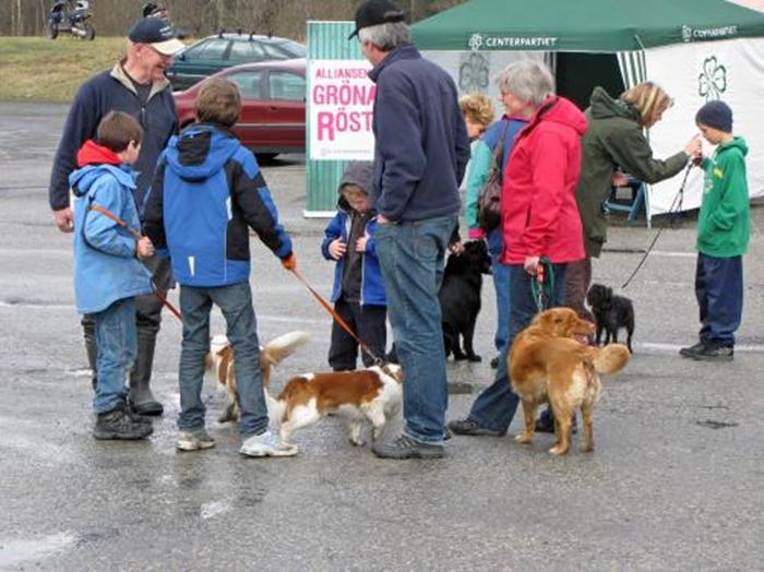 17 hundparaden