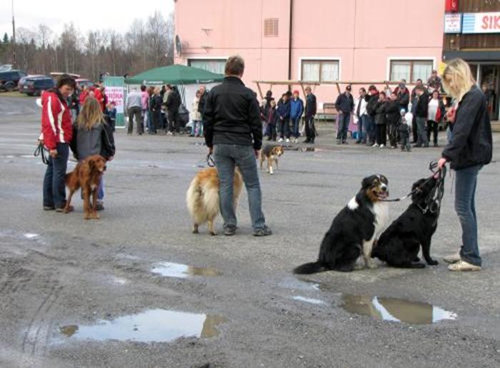 26 väluppfostrade hundar